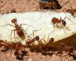 مورچهها خیابانهای نیویورک را تمیز میکنند!