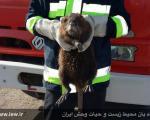 یک پستاندار آمریکایی در خوی! +عکس