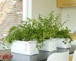 گلدان هایی که پرستار گل ها می شوند +عکس