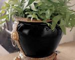 عکس مدل گلدان های زیبا برای دکوراسیون
