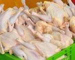 قیمت منطقی مرغ باید 7500 تومان باشد / مردم قدرت خرید ندارند