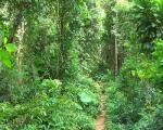 معرفی رشته تکنولوژی جنگلداری
