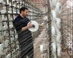 یک متر پارچه چینی، بیکاری یک کارگر ایرانی