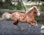 عکس: هنرنمایی زیبا بر روی بدن اسب ها