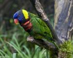 10 گونه از زیبا ترین پرنده های جهان