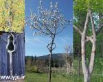 هنرنمایی با درختان جوان +تصاویر