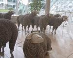 گوسفند تلفنی! + عکس