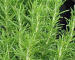 گیاهان دارویی و تقویت حافظه