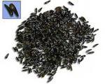 سیاهدانه، آنتی بیوتیک گیاهی