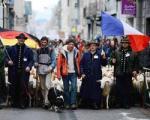 گوسفند هایی که نمی خواهند آر.اف.آی.دی RFID داشته باشند