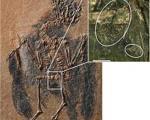 رابطه 47 میلیون ساله گلها و پرندگان فاش شد