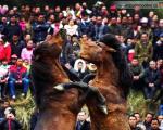 جنگ اسب ها در چین / عکس