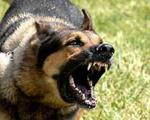 سگ مادرشوهرم به دستور او پایم را گاز می گیرد