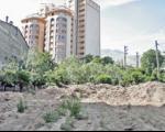توضیح قالیباف درباره قطع درختان در تهران