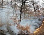 جنگل های ایران از بین می روند ؛ 14 هزار آتش سوزی در 10 سال!