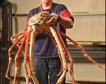 تصویر بزرگترین خرچنگ دنیا