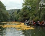 مسابقه اردک ها در آلمان! +عکس