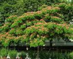 پرورش و نگهداری درخت ابریشم