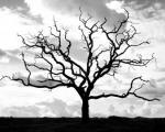 دعای پیامبر برای درخت