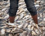 مرگ ماهیان سد فشافویه تقصیر کیست؟