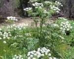 سمی ترین گیاهان جهان