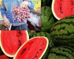 واردات غیرقانونی هندوانه، انگور و کشمش از گمرک