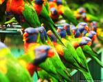 تصاویر فوق العاده زیبا از دنیای پرندگان (5)