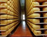 بانکی مخصوص عاشقان پنیر + عکس