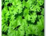 سبزیهای سرشار از زندگی کدامند؟