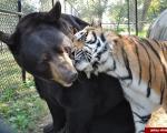 عجیب ترین روابط دوستی در دنیای حیوانات (+تصاویر)