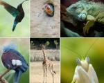 سفر به دنیای زیباترین موجودات جهان + تصاویر