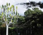 رشد برق بر روی درخت