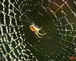 تنیدن موفقیتآمیز تار عنکبوت در آزمایشگاه