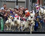 مسابقه گوسفند دوانی در اسکاتلند +عکس