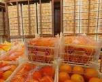 ذخیره 100 هزار تن سیب و پرتقال شب عید