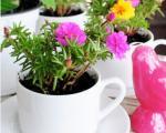 با فنجان و نعلبکیهای چینی گلدانهای رنگی بسازید!