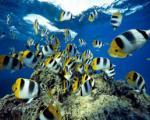 ماهی چگونه در آب نفس می کشد؟