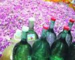 اسانس گل محمدی کیلویی چند میلیون بفروش میرسد؟
