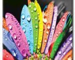 روانشناسی رنگها در طراحی وب