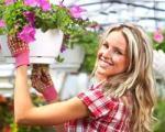 نحوه تمیز کردن گرد و غبار گلهای آپارتمانی