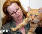 بازگشت گربه پس از 16 سال به خانه +عکس