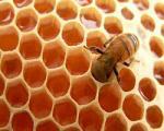 عسل دارای خاصیت ضد پیری برای پوست است