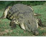 دانستنيهاي جالب درباره تمساح!
