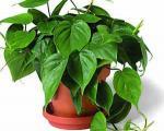 چگونه گیاهی مناسب انتخاب کنیم؟