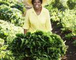 مزرعه زن بیلیونر سیاهپوست در جزیره هاوایی + تصاویر