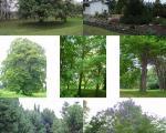 باغ منحصر به فرد ایرانی فردا تخریب می شود (+عکس)