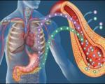 تولید سلولهای انسولین ساز/ نوید درمان دائمی دیابت