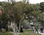 کدام قانون از درختان حمایت میکند؟