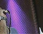 بهنام علمشاهی :کاغذ بازیهای ارشاد روند کنسرت را کند کرده است