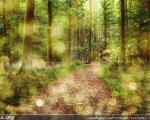 جنگل های رویایی از سراسر جهان / عکس